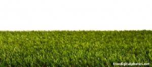 Graswurzel-Gras-roots-graswurzel-basis